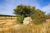Big Stone Near The Tree