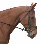 image of horse head  - The head of a chestnut horse isolated on white with a clipping path - JPG