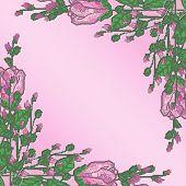 Long Stem Roses Border Pink