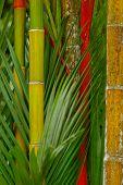 Big Colored Bamboo