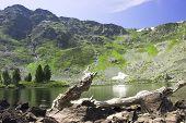 Summer Mountain Landscape poster
