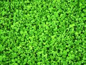 stock photo of green leaves  - Texture  - JPG