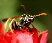 Wasp...(9)