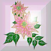 Graceful Pink Poinsettia