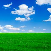 Green field on a background of the blue sky.