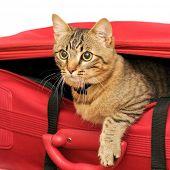 Gato em uma mala