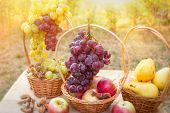 Grape - Red Grapes And White Grapes On Table In Vineyard poster