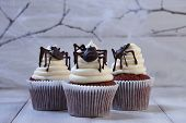 Festive Halloween Cupcakes With Chocolate Spiders In A Row On White Wooden Planks In Blue Moonlight, poster