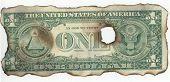 Burnt Dollar Back