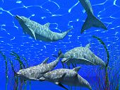 foto of cetacea  - dolphins under water image with sunlight effect  - JPG