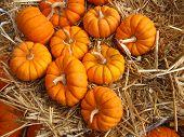 small mini pumpkins up close