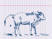 Hand drawing zebu cow in action