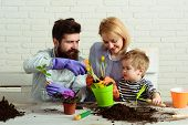 Flower Ground. Work For Whole Family. Child With Parents Cares For Plants Together. Mom, Dad And Son poster