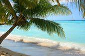 Schaduwrijke Palm