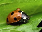 Ladybug & Drop