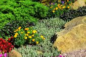 Beautiful landscape design: colourful flowers and a stone