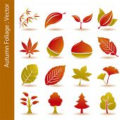 Autumn foliage leaf icons set. Illustration vector.