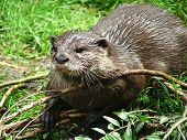 Otter - 4