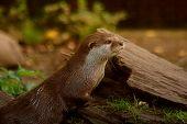 Otter - 8