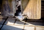 Homeless Cat Hiding Behind A Wooden Fence poster
