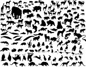 pic of zoo animals  - Big collection of different illustration vector animals - JPG