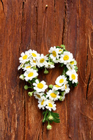 picture of feverfew  - heart of feverfew flower on wooden background - JPG