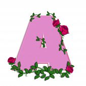 pic of climbing roses  - The letter A in the alphabet set Blushing Roses is soft pink - JPG
