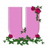 stock photo of climbing roses  - The letter U in the alphabet set Blushing Roses is soft pink - JPG