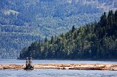 Coastal Logging