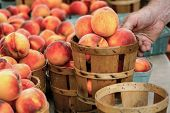 Gorgeous Fresh Peaches