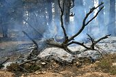 Forest Fire Ceasing