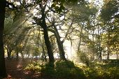 image of sun rays  - strong sun rays through the tree canopy in a mythical forest - JPG