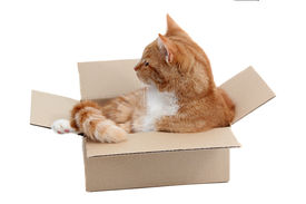 stock photo of snoopy  - snoopy tomcat in removal box on white - JPG
