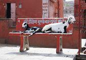 Ziegen auf street