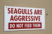 Seagulls are aggressive.