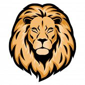 stock photo of lion  - Lion head - JPG