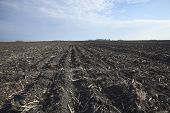 Rich, Black Midwestern Soil In Plowed Field
