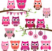 stock photo of owls  - Vector Collection of Girl Baby Shower Themed Owls and Branches - JPG