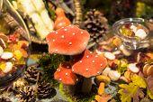 Strange Rainforest Mushroom