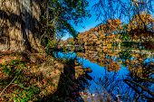 stock photo of guadalupe  - Beautiful Fall Foliage in the Morning Sun on the Guadalupe River - JPG