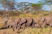 Elefantenfamilie zu Fuß im Busch