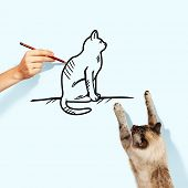 Image of siamese cat catching drawn cat