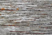 Old Weathered Wood Texture Natural Background. poster