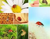 Collage of insects and flowers