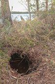 Beavers hole on forest lake