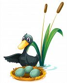 Illustration of a duck at the pond beside her eggs on a white background
