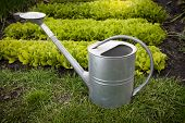 Galvanized Watering Can On Garden Bed At Sunny Day