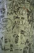 Tree Carvings
