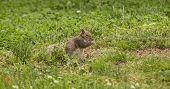 Squirrel prays for a nut!