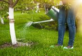 Woman Pouring Water Of Watering Can On Tree At Garden